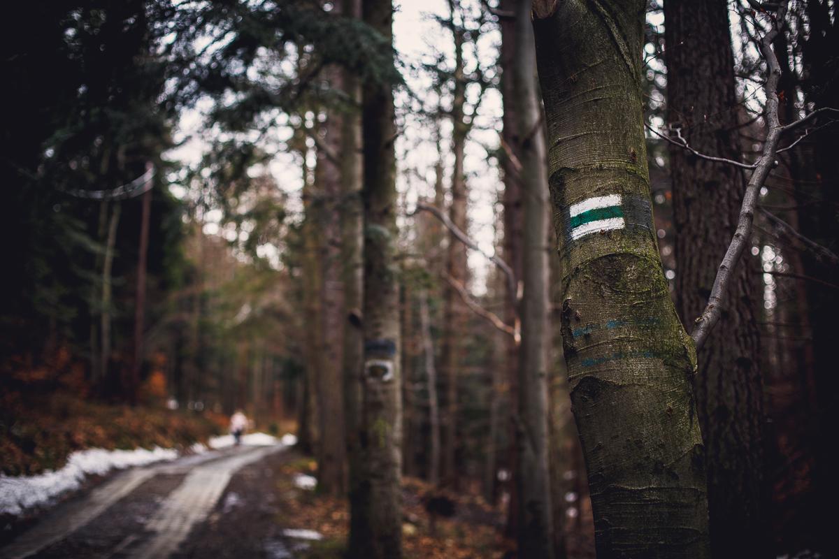 Szczyrk Skrzyczne spacer zielonym szlakiem fotografie-4