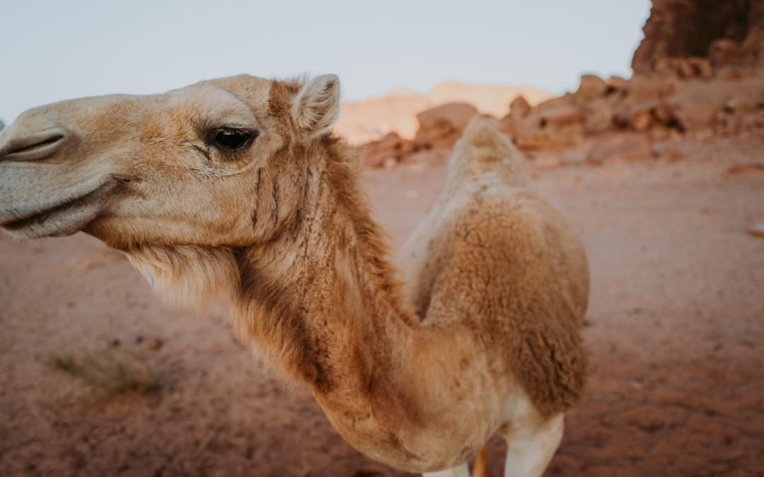 Jordania – pierwszy dzień w dzikim kraju